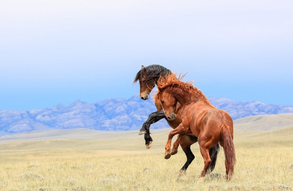 Still Life With Wild Horses The Plaid Horse Magazine