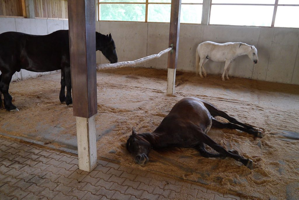 From The Ground Up 5 Benefits Of The Softbed Comfort Stall Mattress The Plaid Horse Magazine