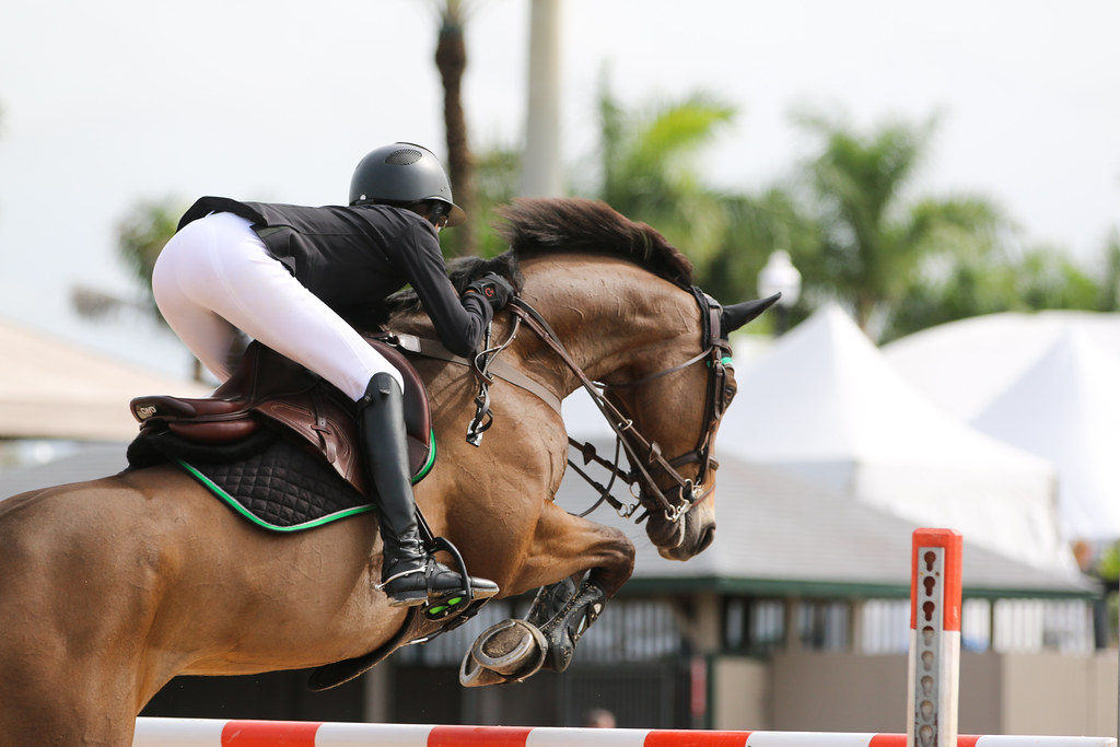 Horses Shouldn't Always Be Expected to Jump